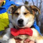 ,Erik milučký psíček do dobrej rodiny kríženec