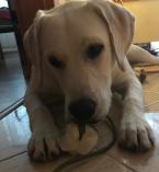 """,hľadám dočasného """"majiteľa"""" pre môjho psíka za finančnú odmenu"""
