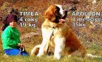 Neuznané plemená a krížence,MOSKOVSKÝ STRÁŽNY PES