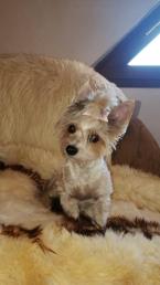 ,Opatrovanie Vašich domácich miláčikov- psíkov a mačičiek