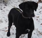 Strateny pes na Povazskom Inovci