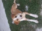 Stratil sa nám pes Maxo